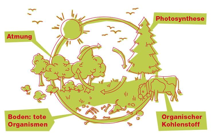 EBLD-Blog-Illustration-CO2-1000x667px